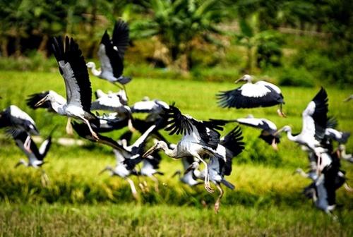 Mùa chim héc - Tản văn của Lương Tùng Nam